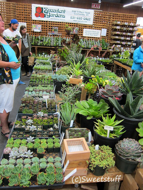 Plants for sale from Succulent Gardens