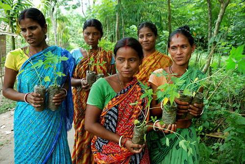 Индусы сажают 111 деревьев, когда рождается девочка