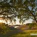Warm Embrace -- Folsom Lake, CA by Jeff Swanson -- www.interfacingnature.com