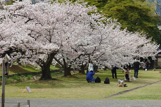 0294 - Hamarikyu Gardens