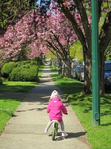 Balance-biking the blossoms