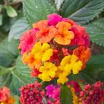 Flower in Elche