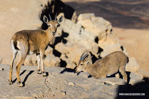 Israel - Negev Desert - Makhtesh Ramon 07