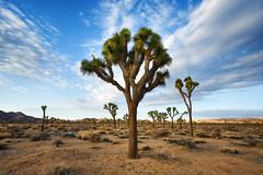 Desert Remedy