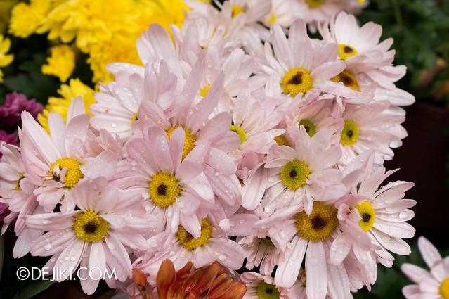 Sentosa Flowers 2013 - Freshly Wet 3