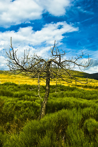 tree nature ciel nuage arbre mont champ herbe montlozre300812aouttourismemontlozère300812aouttourisme
