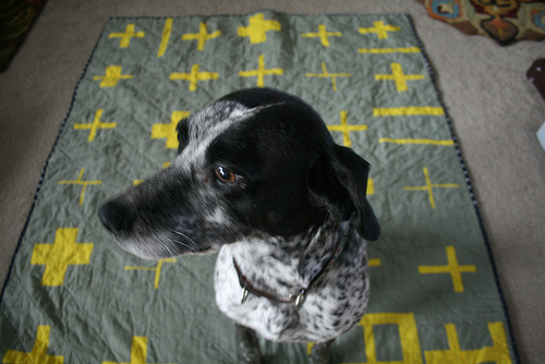 Misty on Cross Quilt