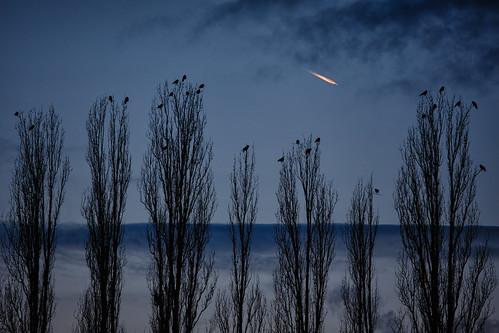 blue sunset shadow sky cold berlin silhouette plane germany deutschland cool heaven sonnenuntergang himmel blau crows kalt flugzeug schatten orangeblue krähen blueandblack canonef70200mm14l canoneos5dmarkiii