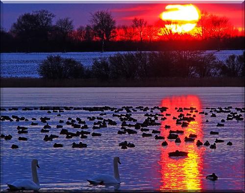 sunset sky sun reflection colors sonnenuntergang himmel vögel eis spiegelung eveninglight abendrot abendlicht pönitzersee wassaer