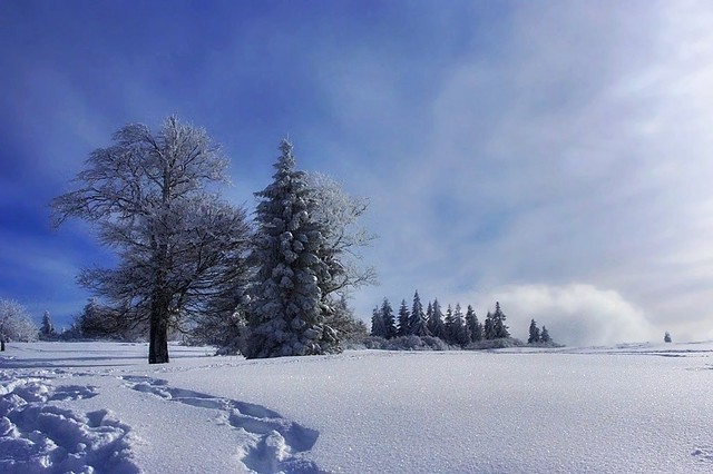 Winter in Alsace -4-