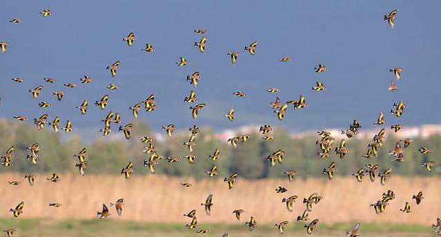 Landscape with goldfinches - Paesaggio con cardellini