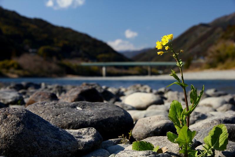 IMG_5832_2-24 Niyodo River Stroll