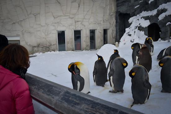 20130223-DSC_2135-penguin_zoo