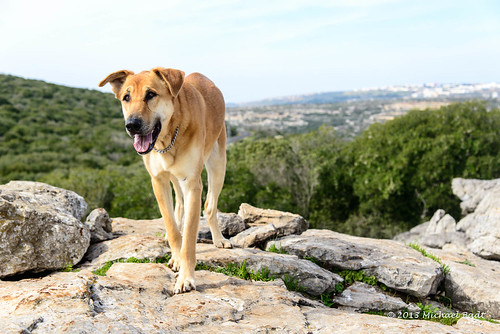 pets dogs animals israel naturelandscape haluts northdistrict
