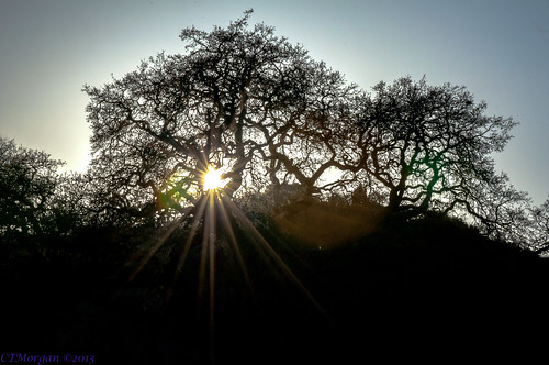 california sunset tree oak sanramon unitedstates oaktree silhoutte