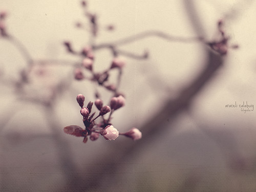 Días de primavera.