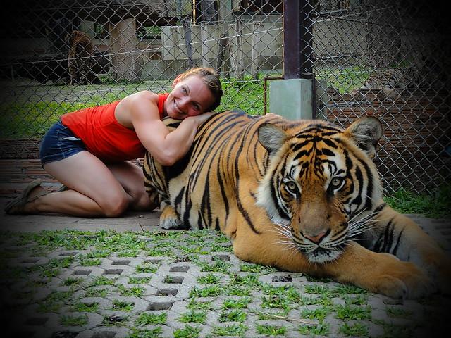lindsey_tiger