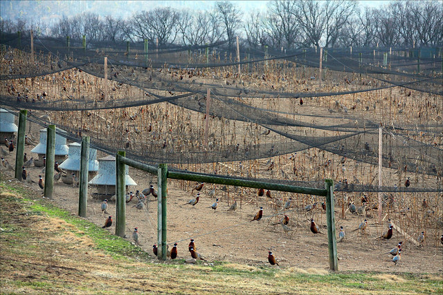 Image Result For Chicken Fence