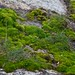 Green moss on rocks. Spring melt gives it the moisture to grow.
