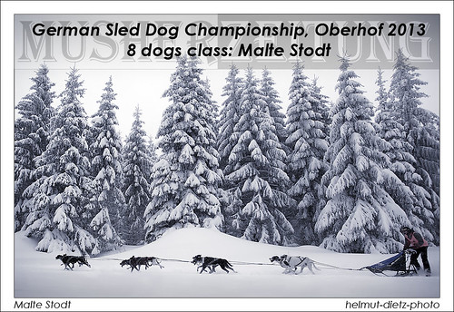 German Sled Dog Championship Sprint 2013, Oberhof, 8 dogs class: Malte Stodt, helmut-dietz-photo