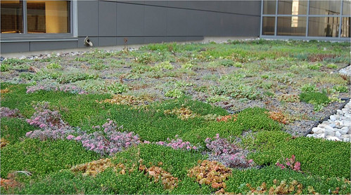 Photo set of Green Roofs