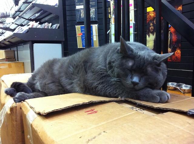 Bleecker Street Recordsin kissa moikattu. Nyt voi lähteä kotiin.