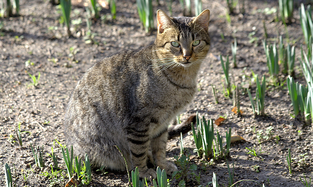 gato jardinero