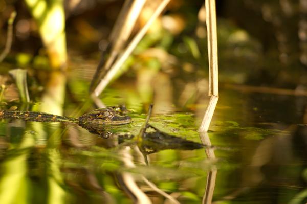 RYALE_Everglades-077