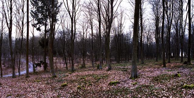 Alton Woodland
