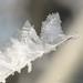 hoar-frost-detail-14