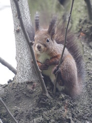 Windy end of March: Squirrel I