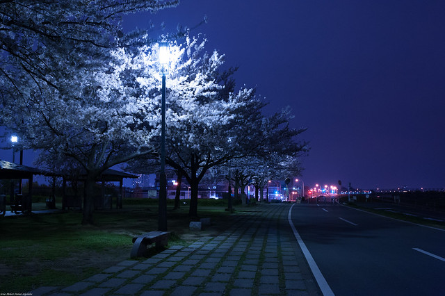 Night Cycling Road - Blue