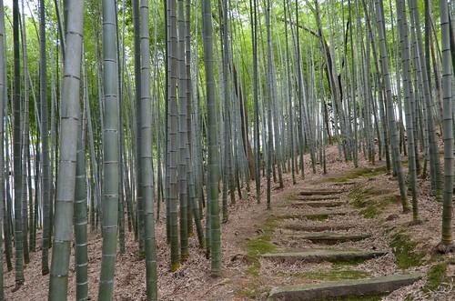 Adashino Nenbetsu Bamboo Grove