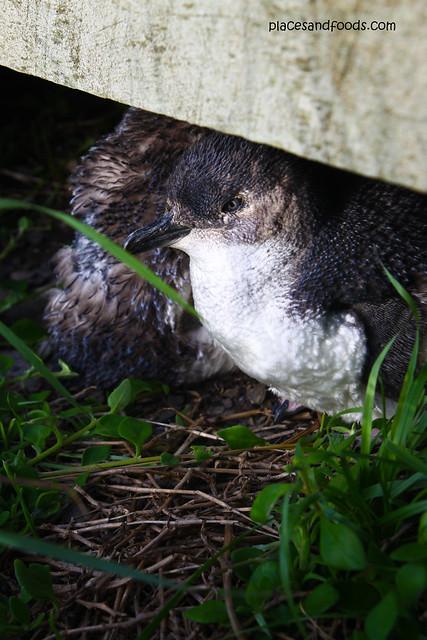 Penguin Natural Foods Cornbread Ingredients