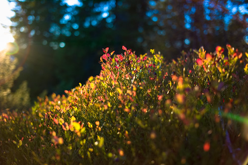 blueberry sunset mountain forest fall autumn norway kongsberg skrinm leica m9