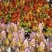 Riot of color, Rio de Janeiro Carnival Sambodrome