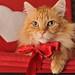 Valentine boy by Red~Star