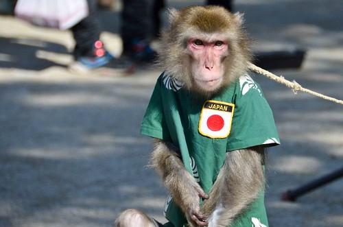 Sad Performing Monkey