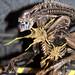NECA : Aliens and Predators : Toy Fair 2013