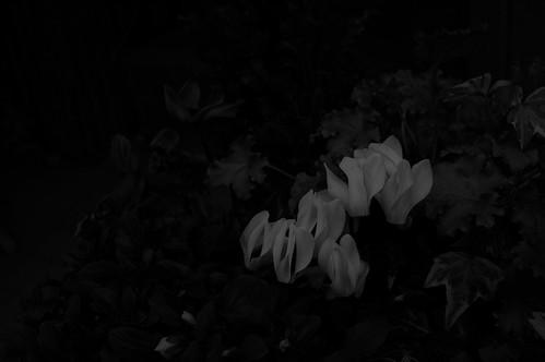 bloom in windy winter