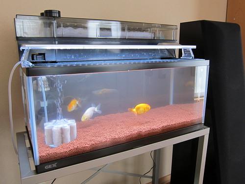 Aquarium Feb. 17, 2013 (2)
