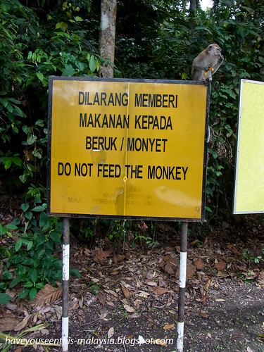 do not feed the monkey R0021544 copy