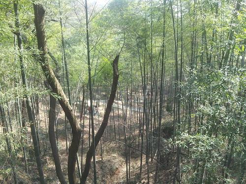 沿途的竹林