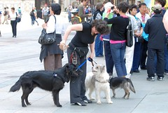street dog(0.0), police dog(0.0), conformation show(0.0), animal(1.0), dog(1.0), pet(1.0), mammal(1.0), dog walking(1.0),