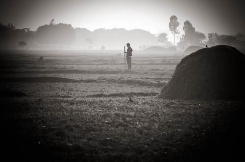 nepal asia fields