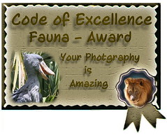 CoE Final Fauna Award