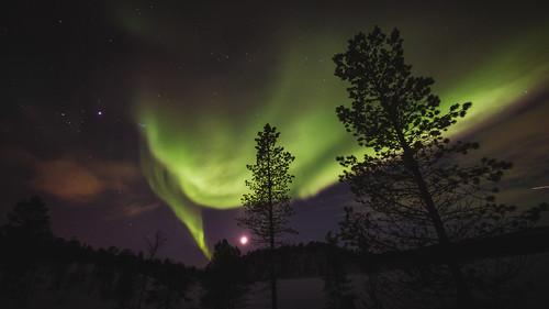 [フリー画像素材] 自然風景, オーロラ, 樹木, 夜空, 風景 - ノルウェー ID:201303042000