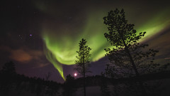[Free Images] Nature, Aurora, Trees, Night Sky, Landscape - Norway ID:201303042000