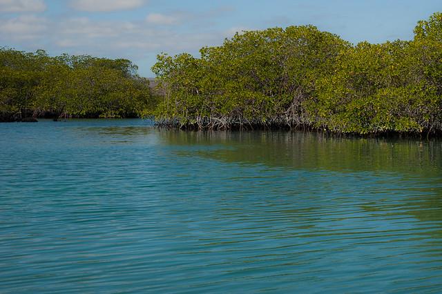 Galapagos: Mangrove Marshlands