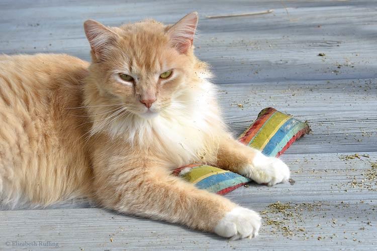 Big orange cat with a catnip toy by Elizabeth Ruffing